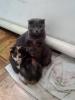 Котята в заботливые руки