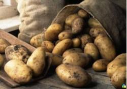 Картошка с личного подворья