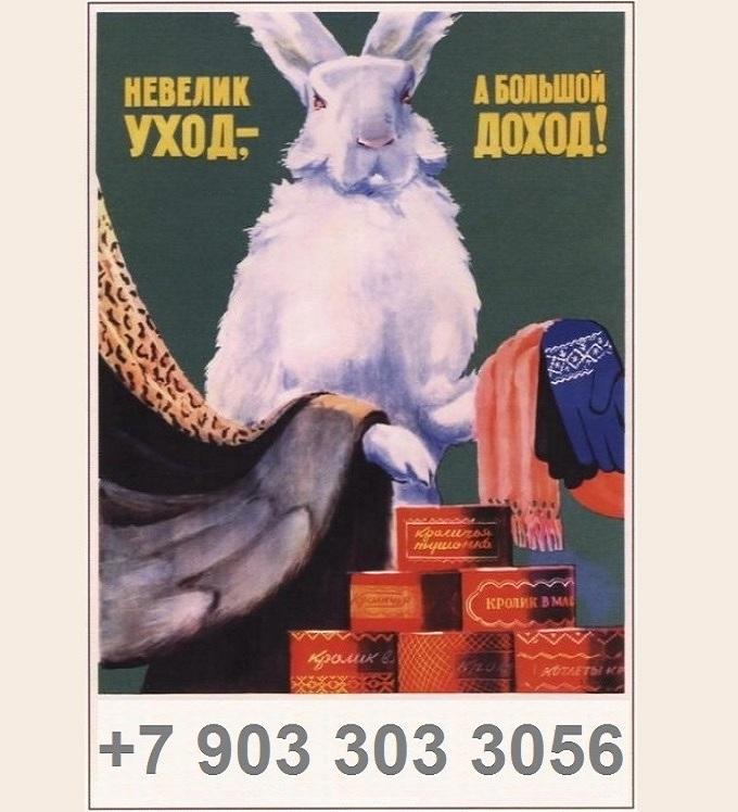 Кролики2